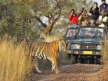 Golden Triangle Tour with Tiger Safari